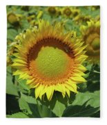 Sunflower And Honeybee July Two K O Nine Fleece Blanket