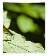 Sunlit Dragonfly Fleece Blanket