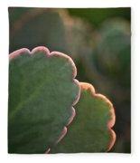 Sunset Succulents Fleece Blanket