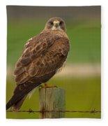 Swainsons Hawk Fleece Blanket