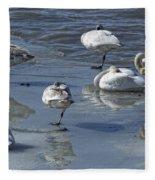 Swans On The Ice Along The Tagish Fleece Blanket