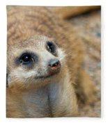 Sweet Meerkat Face Fleece Blanket