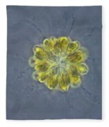 Synura Algae, Lm Fleece Blanket