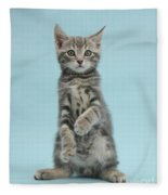 Tabby Kitten Sitting Up Fleece Blanket