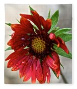 Teary Gaillardia Fleece Blanket