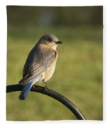 The Bluebird Of Happiness Fleece Blanket