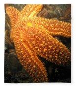 The Great Starfish Fleece Blanket