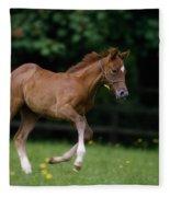 Thoroughbred Horse, National Stud Fleece Blanket