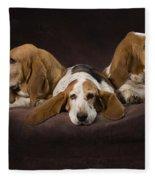 Three Basset Hound On Brown Muslin Fleece Blanket