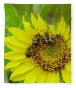 Three Bees Hunkering Down Fleece Blanket