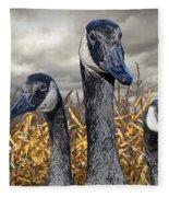 Three Canada Geese In An Autumn Cornfield Fleece Blanket