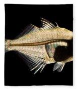 Tibetan Glassfish Fleece Blanket