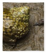 Top Shell Clanculus Sp Fleece Blanket
