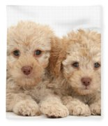 Toy Labradoodle Puppies Fleece Blanket