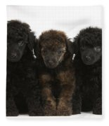 Toy Poodle Pups Fleece Blanket