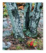 Tree Trio In Lichen At Hawn State Park Fleece Blanket