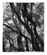 Trees Beautiful Trees Fleece Blanket