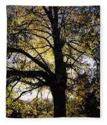 Trees During Autumn Fleece Blanket