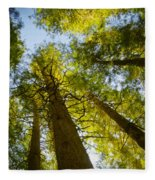 Trees Of Devoto Fleece Blanket