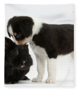 Tricolor Border Collie Pup With Black Fleece Blanket