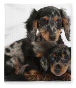 Tricolor Dachshund Puppies Fleece Blanket