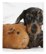 Tricolor Merle Dachshund Pup And Red Fleece Blanket
