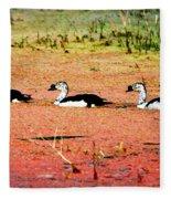 Trio Of Ducks Fleece Blanket