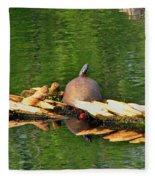 Turtle Sunbathing  Fleece Blanket