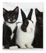 Tuxedo Kittens With Dutch Rabbit Fleece Blanket