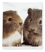 Two Young Guinea Pigs Fleece Blanket