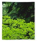 Umbrella Of Trees In Forest Fleece Blanket