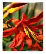 Vibrant Crocosmia Fleece Blanket