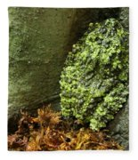 Vietnamese Mossy Frog Fleece Blanket