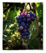 Vineyard 31 Fleece Blanket