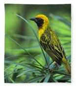 Vitelline Masked Weaver Fleece Blanket