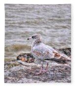 Waiting Gull Fleece Blanket