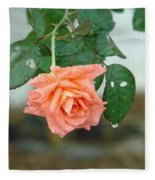 Water Dripping From A Peach Rose After Rain Fleece Blanket