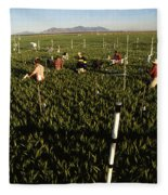 Wheat And Elevated Carbon Dioxide Fleece Blanket