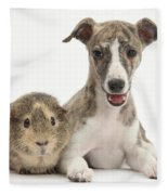 Whippet Pup With Guinea Pig Fleece Blanket