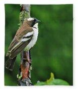 White-browed Sparrow-weaver Fleece Blanket