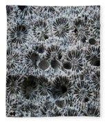 White Coral 1 Koh Kut Thailand Fleece Blanket