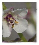 White Mullein - Verbascum Lychnitis Wildflower Fleece Blanket
