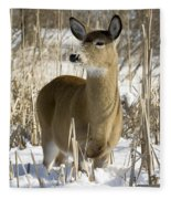 White-tailed Deer In A Snow-covered Fleece Blanket