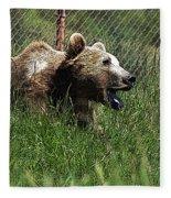 Wild Life Safari Bear Fleece Blanket
