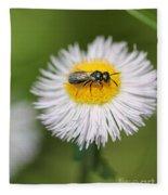 Wildflower Named Robin's Plantain Fleece Blanket