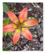 Wood Lily Lilium Philadelphicum Fleece Blanket