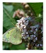 Yellow Cabbage Moth Fleece Blanket