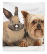 Yorkshire Terrier And Young Rabbit Fleece Blanket