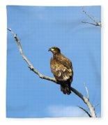 Young Bald Eagle Fleece Blanket
