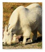 Yummmmmmmy Fleece Blanket